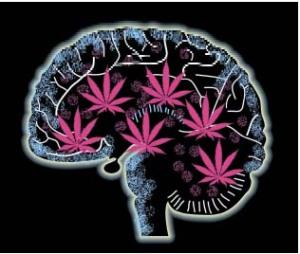Cerebro con cannabinoides por respirar el aire de Madrid y Barcelona