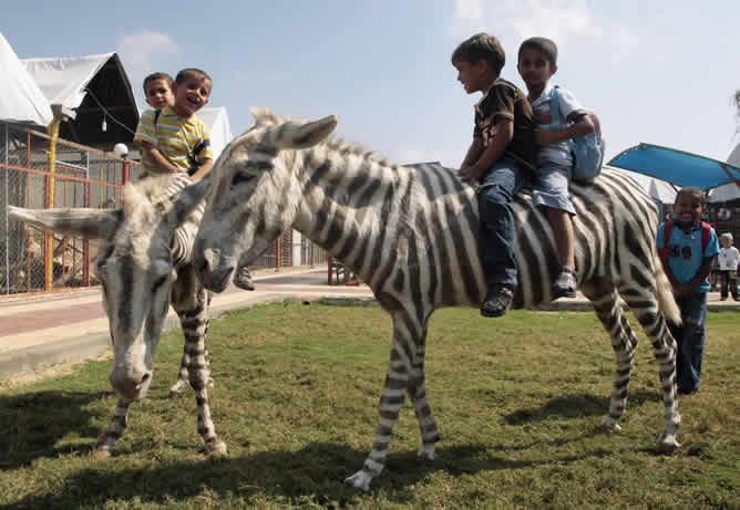 Los niños se divierten de lo lindo en los burros cebra. La foto la tomamos de Cadena Ser, y es de Reuters