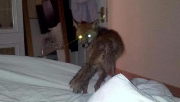 El ciudadano León se acostó con una zorra... literalmente